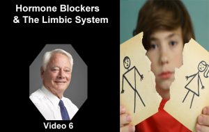Hormone blockers Limbic System - Video